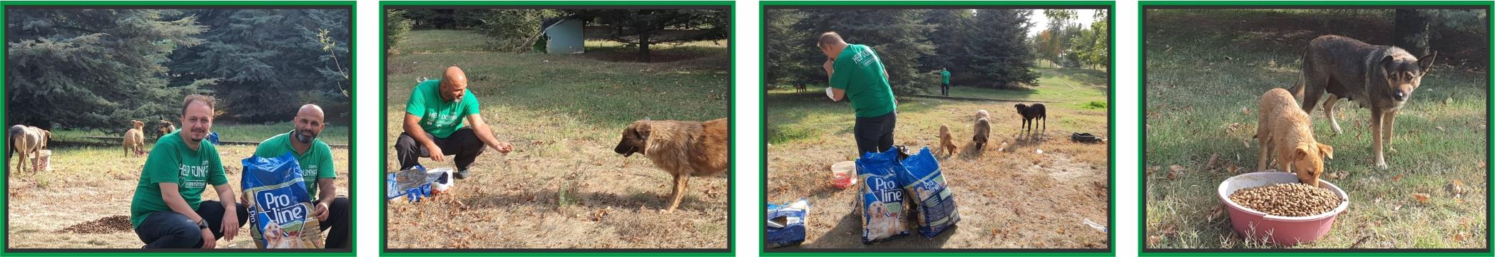 Nothilfe Tiere Help Dunya