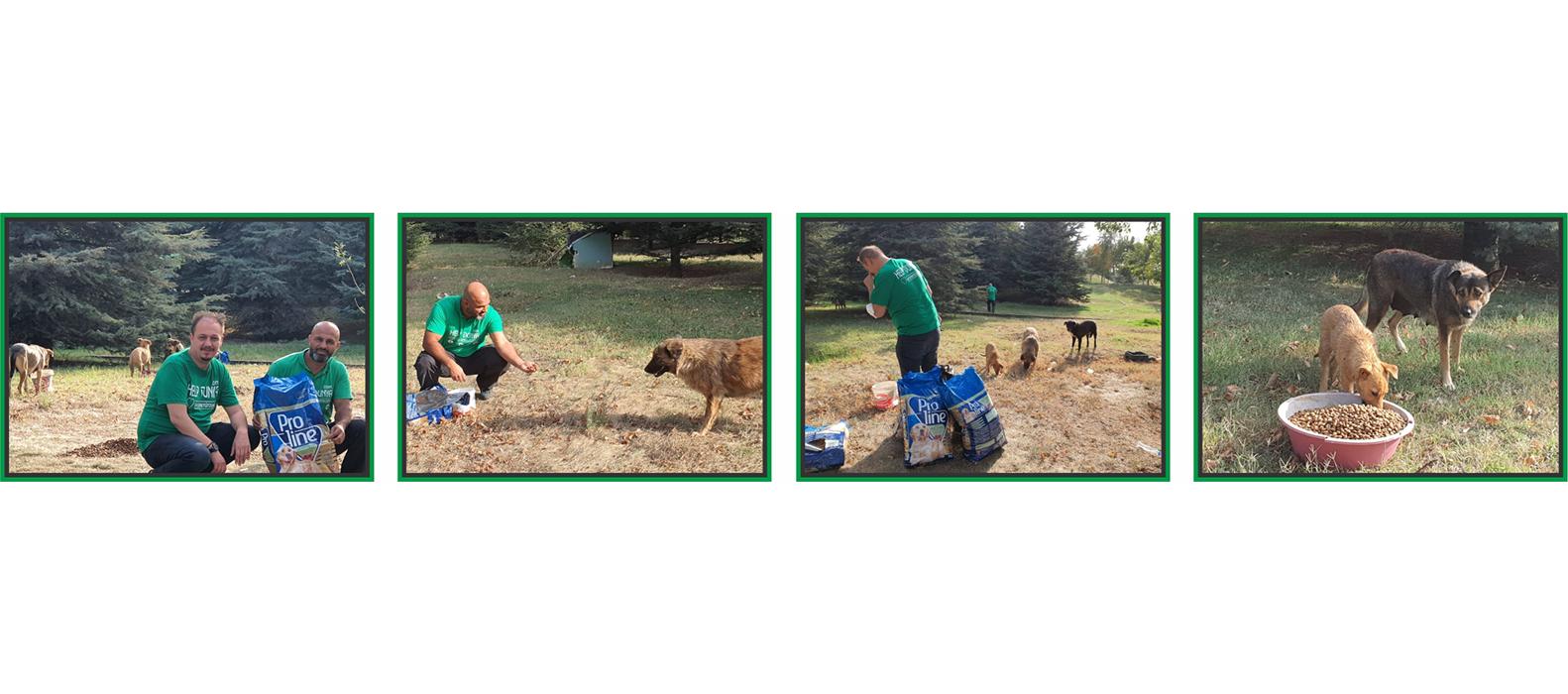 Help-Dunya-e.V. Spenden für Tiere